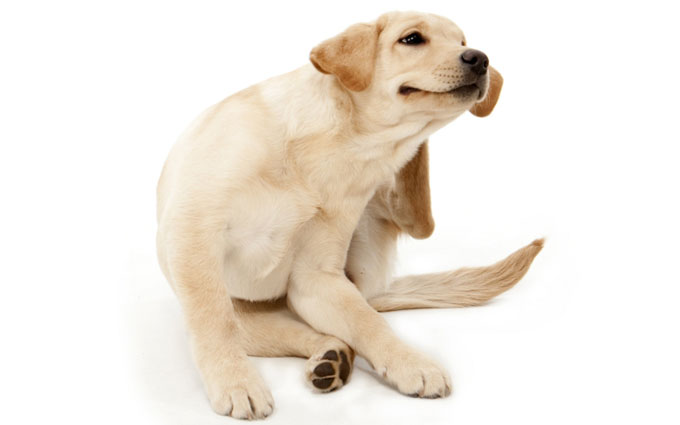 8 Reasons Why Your Dog Keeps Licking His Paws